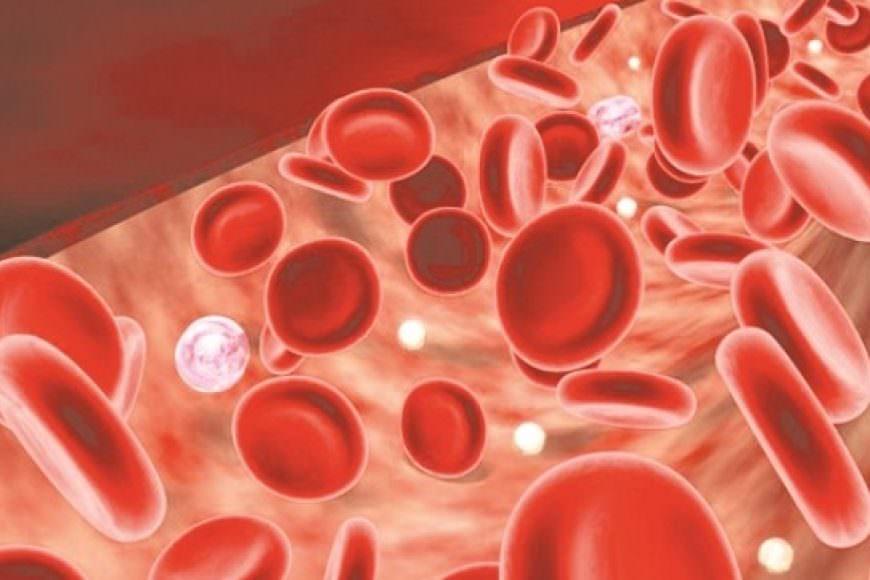 Các chỉ số về máu