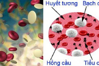 Các tế bào máu