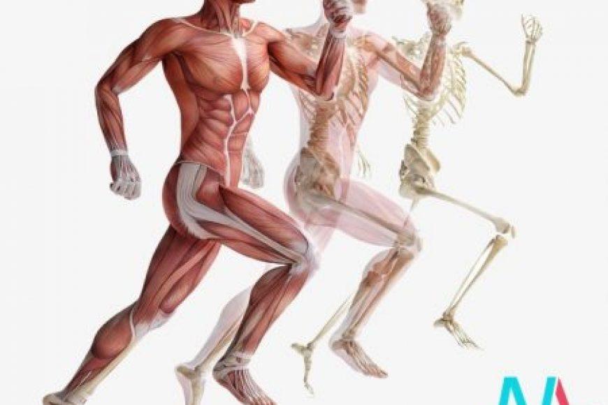 Phát hiện cơ quan thứ 80 trong cơ thể người