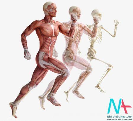 giải phẫu cơ thể người