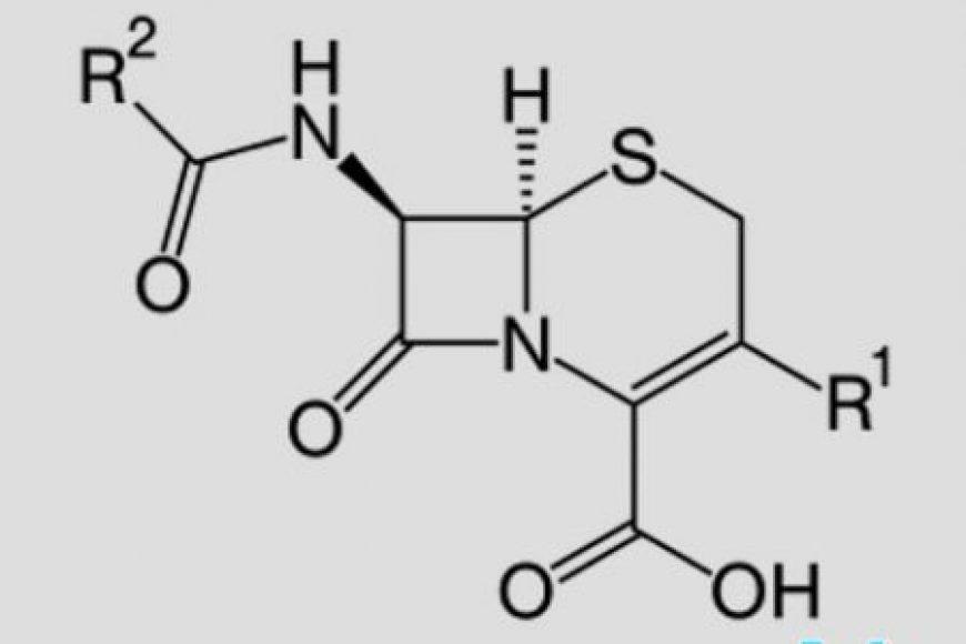Kháng sinh nhóm Cephalosporin