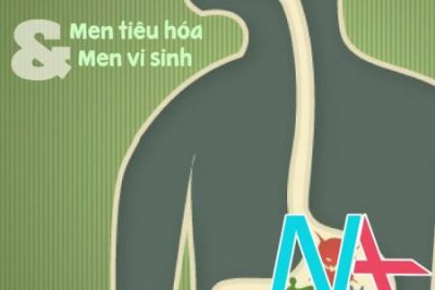 Phân biệt men tiêu hóa và men vi sinh