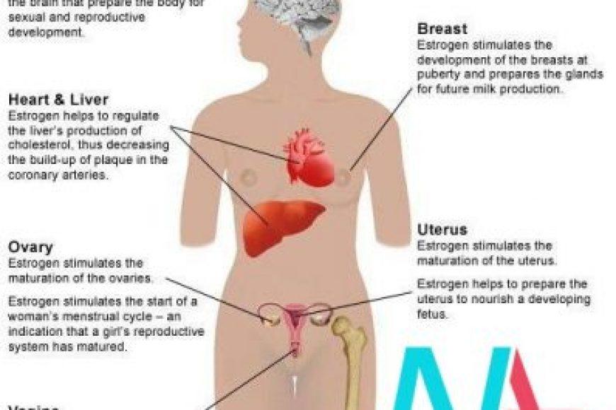 Hormon Oestrogen có tác dụng gì với phụ nữ?