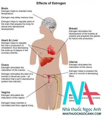 Oestrogen có tác dụng gì