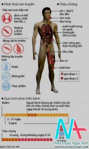 triệu chứng và quá trình phát triển bệnh Ebola