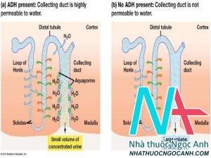 Hình ảnh: Hội chứng tiết hormon ADH không thích hợp