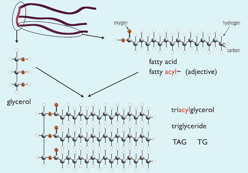 Suppocire có bản chất là các Triglicerid