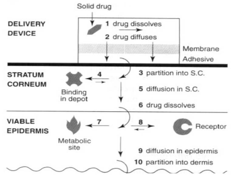 Cơ chế giải phóng và hấp thu của thuốc dán thấm qua da