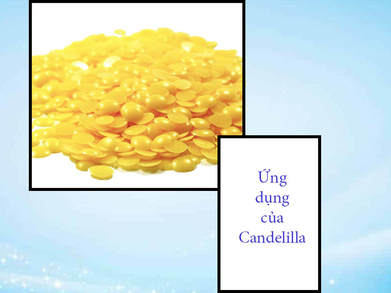 Ứng dụng của sáp Candelilla
