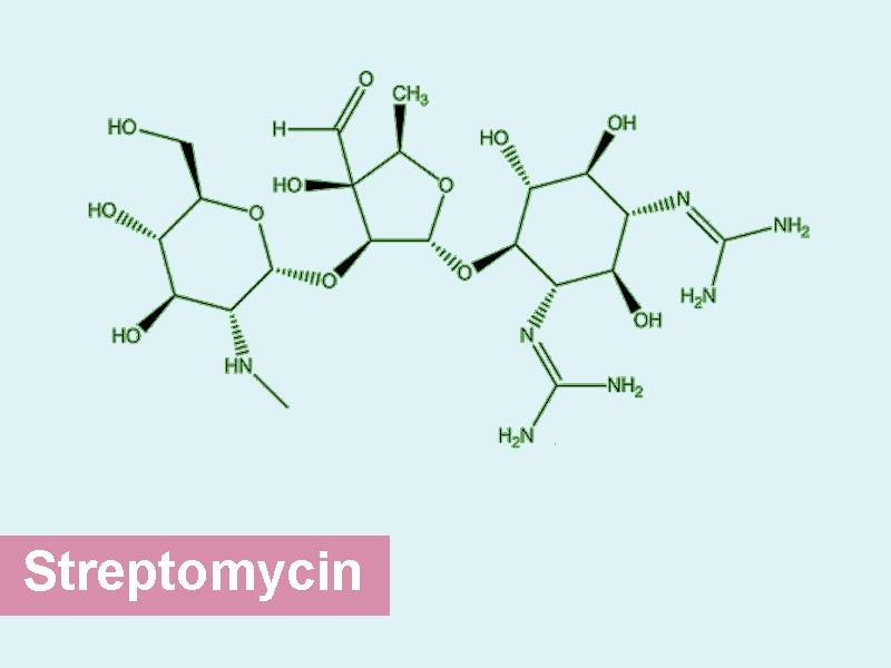 Công thức kháng sinh streptomycin