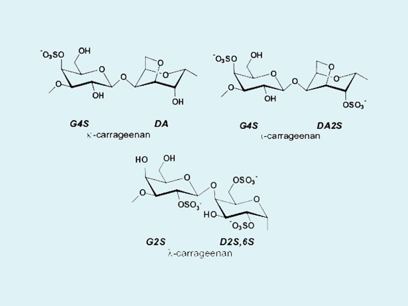 Cấu trúc hóa học của carrageenan